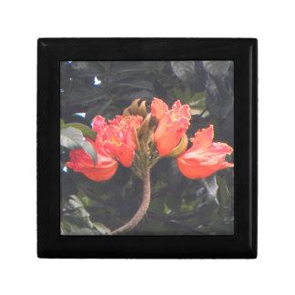 Den tropiska blommaHawaii minnessaken boxas den Smyckeskrin