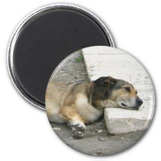 Den trött hundmagneten, skräddarsy magnet