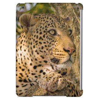 Den vuxna leoparden (pantheraen Pardus) vilar