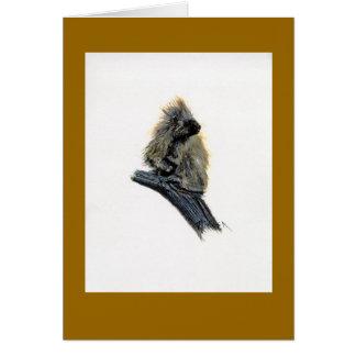 Den westerna porcupinen noterar/hälsningkortet OBS kort