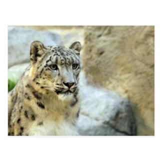 Design för katt för snöLeopard stor Vykort