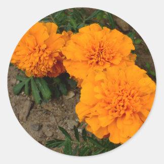 Design för tre orange ringblommar runt klistermärke