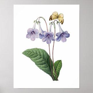Det botaniska trycket av BLÅTT SÄTTA EN KLOCKA PÅ  Poster