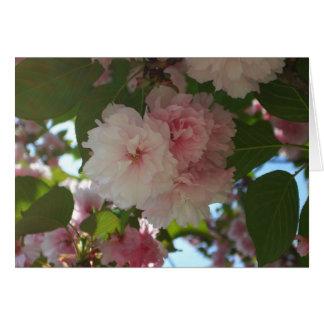 Det dubbla blomstra körsbärsröda träd fjädrar jag hälsningskort