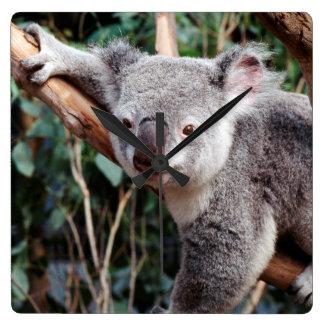 Det Featherdale djurlivet parkerar, Koalabjörnar Fyrkantig Klocka