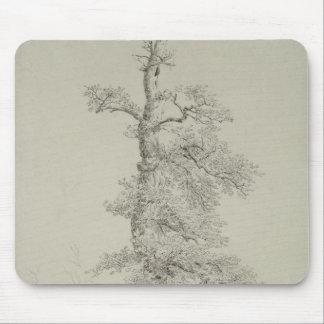 Det forntida Oakträd med en storks bygga bo Musmatta
