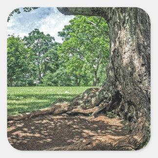 Det forntida träd och rotar fyrkantigt klistermärke