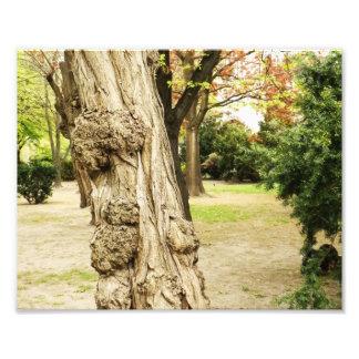 Det fria träd bildar fotografiskt tryck