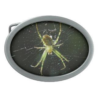 Det glödande gröna spindelbältet spänner fast