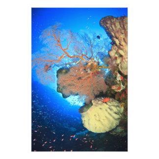 Det Gorgonian havet fläktar, den Gunung Api ön, Ba Fototryck