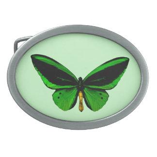 Det gröna fjärilsbältet spänner fast