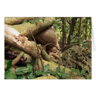 Det jätte- träd rotar resa till roliga Zanzibar Hälsningskort