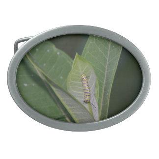 Det monarkCaterpillar bältet spänner fast