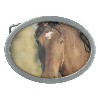 Det Morgan hästbältet spänner fast
