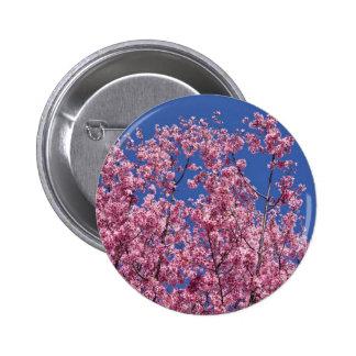 Det Sakura körsbäret blomstrar in i blåtten Standard Knapp Rund 5.7 Cm
