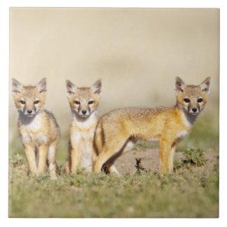 Det snabba barn för räv (Vulpesmacrotis) på hålan  Kakelplatta