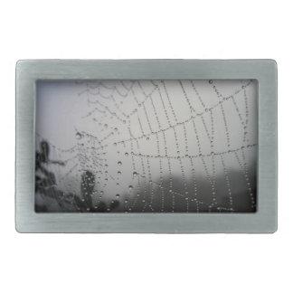 Det svartvita spindelnätbältet spänner fast