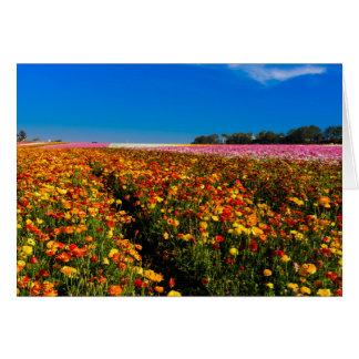 Det tomma hälsningkortet med blommafält beklär på hälsningskort
