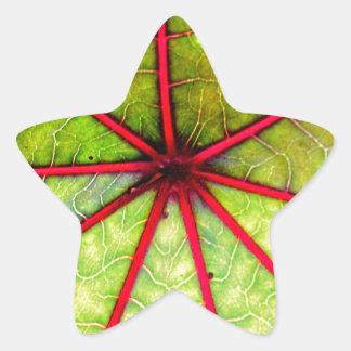Det tropiska Castorlöv strukturerar Stjärnformat Klistermärke