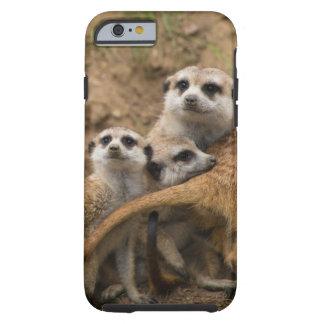 Det var inte mig meerkats. tough iPhone 6 fodral