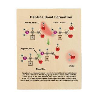 Diagram för Peptid förbindelsebildande Trätavla