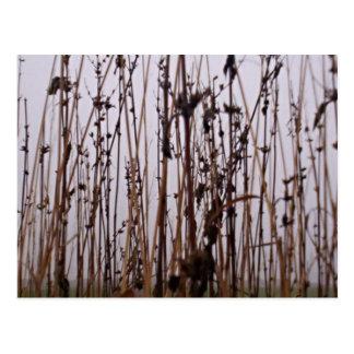 Djärva ogräs vykort