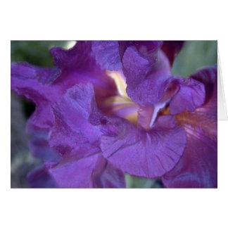 Djupt kort för Rödaktig-lilor IrisCloseup