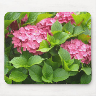 Djupt - rosa vanlig hortensia musmatta
