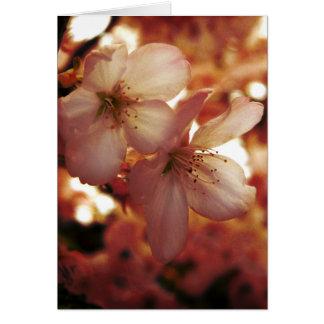 Djupt - rosor hälsningskort