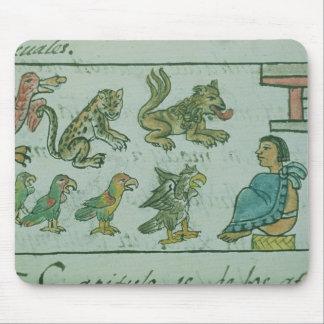 Djur av den Aztec kejsaren Musmatta