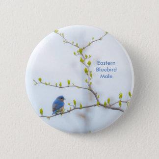 Djur fågelöstrablåsångare standard knapp rund 5.7 cm