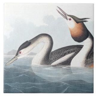 Djur för djurliv för Audubon doppingfåglar Kakelplatta