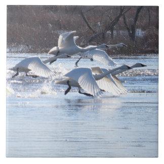 Djur för djurliv för fåglar för Tundrasvan Kakelplatta