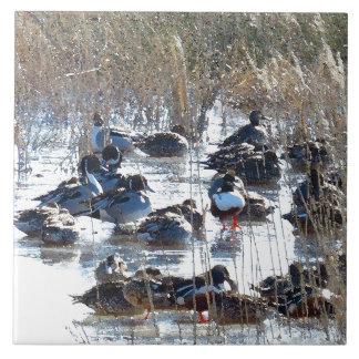 Djur för djurliv för Pintailankafåglar belägger Kakelplatta