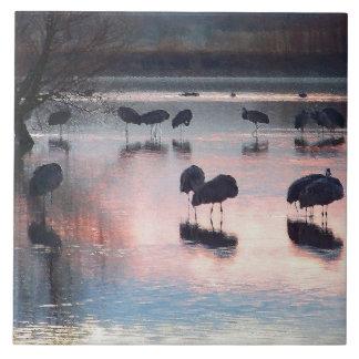 Djur för djurliv för Sandhill kranfåglar Kakelplatta