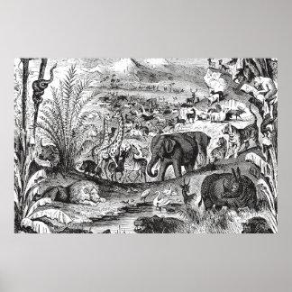 Djur för illustration för vintage1800s afrikanska poster