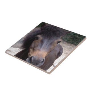 Djur häst, ponny kakelplatta