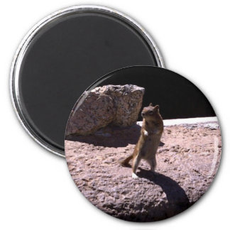 Djur magnet magnet rund 5.7 cm