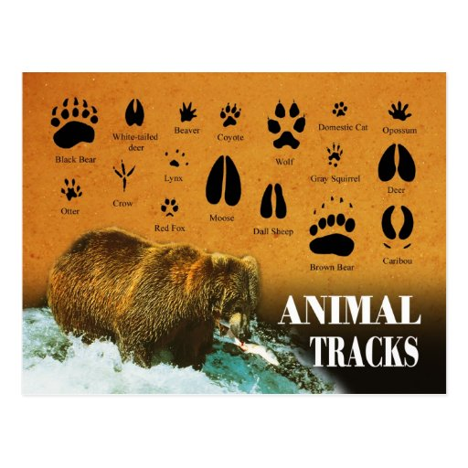 Djur spårar vykort