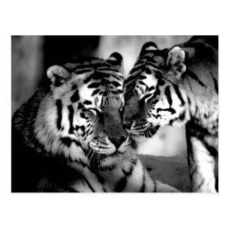 Djurliv fantastisk tiger vykort