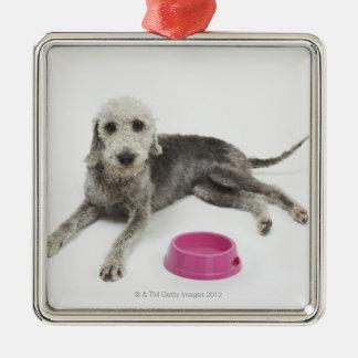 Djuromsorgt, vård- och näring för inhemska husdjur julgransprydnad metall