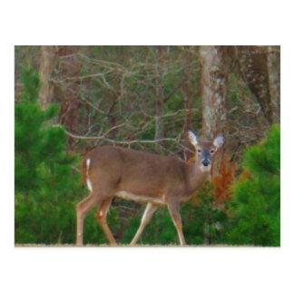 Doe en hjort & grästräd vykort