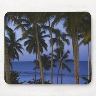 Dominikanska republiken Samana peninsula, Las Musmatta