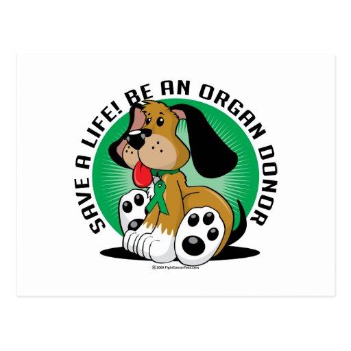 Donor hund för organ vykort