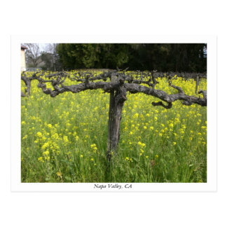 Dormant vine - Napa Valley Vykort