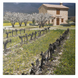 Dormant vingård, fruktblommar, stenhus, kakelplatta
