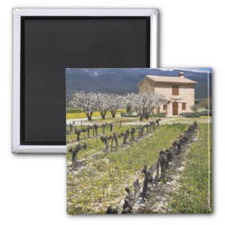Dormant vingård, fruktblommar, stenhus, magnet