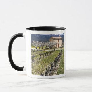 Dormant vingård, fruktblommar, stenhus, mugg