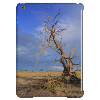 Dött träd för kameltagg (acaciaen Erioloba)
