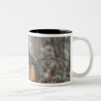 Douglass ekorre, Oregon kaskader Två-Tonad Mugg